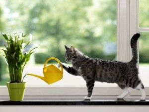 120606__a-cat-watering-plants_p